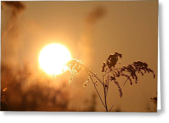 Nature Photos Greeting Cards - Sun God  Greeting Card by Neal  Eslinger