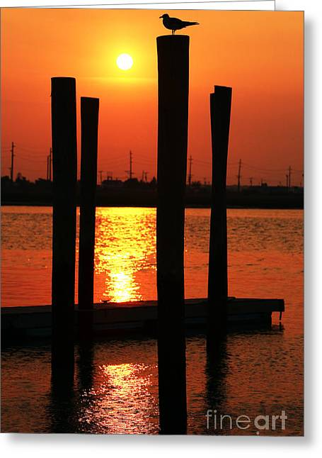 Going Down Greeting Cards - Sun Going Down Greeting Card by John Rizzuto