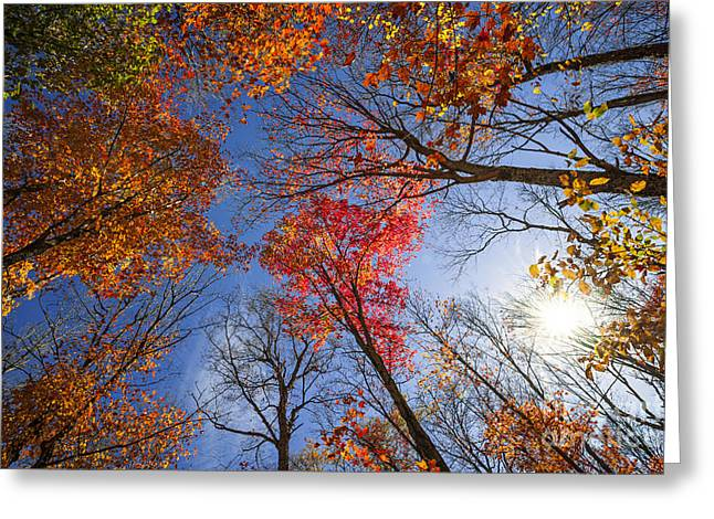 Fall Trees Greeting Cards - Sun in fall forest canopy  Greeting Card by Elena Elisseeva
