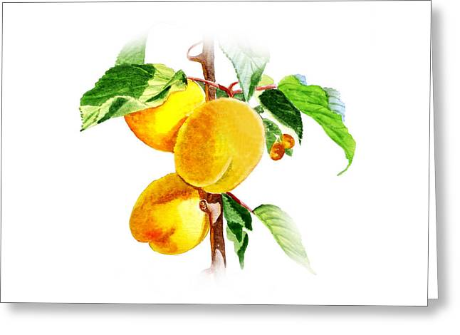 Apricots Paintings Greeting Cards - Sun Kissed Apricots Greeting Card by Irina Sztukowski