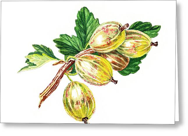 Sour Greeting Cards - Sun Kissed Gooseberries Branch Greeting Card by Irina Sztukowski