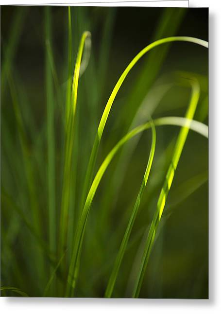 Sun-kissed Grass Greeting Card by Christina Rollo
