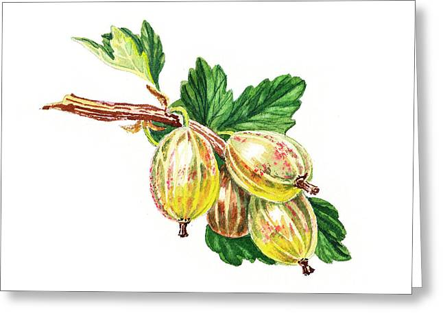 Sour Greeting Cards - Sun Kissed Green Gooseberries Greeting Card by Irina Sztukowski