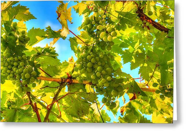 Grapevine Autumn Leaf Digital Greeting Cards - Sun kissed green grapes Greeting Card by Eti Reid