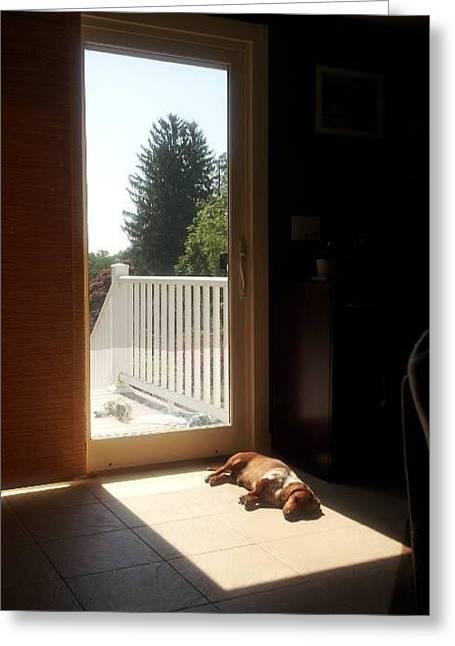 Babysitting Greeting Cards - Sun Nap Greeting Card by Gina DiPietrantonio