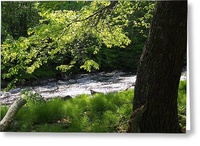 Blackstone River Greeting Cards - Sun on the River Greeting Card by Ted Rickson