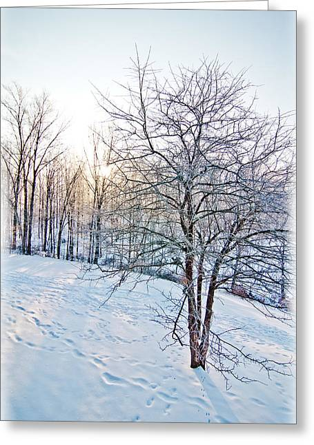 Wintry Pyrography Greeting Cards - Sun Over A Snowy Day Greeting Card by Shirley Tinkham