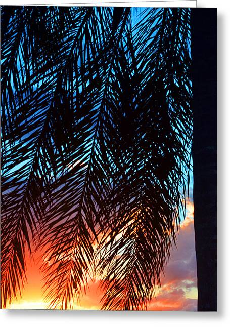 Florida House Greeting Cards - Sun Palm Greeting Card by Laura  Fasulo