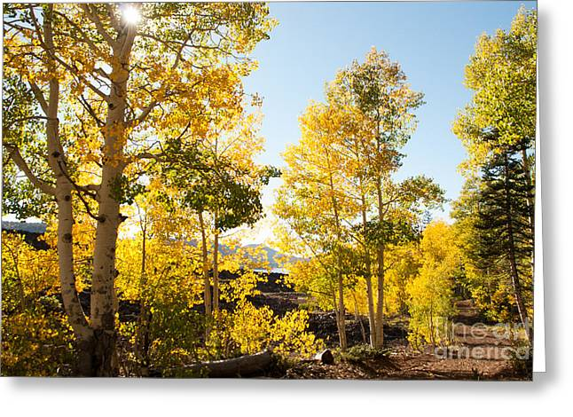 Geobob Greeting Cards - Sun Rays through trees in Fall Navajo lake Utah Greeting Card by Robert Ford