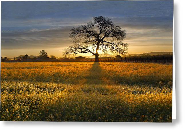 Sonoma County Vineyards. Greeting Cards - Sun Rise Oak in Yellow Mustard Greeting Card by Stan Angel