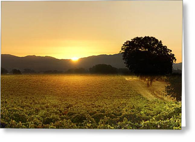 Recently Sold -  - Angel Blues Greeting Cards - Sun rise Sonoma Greeting Card by Stan Angel