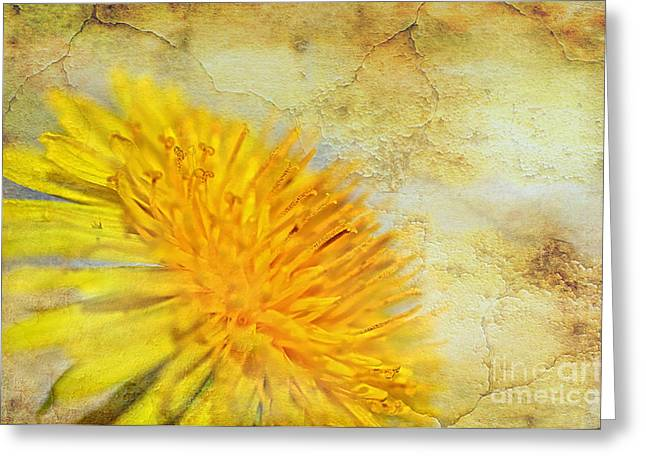 Texture Overlay Greeting Cards - Sun-Scorched Dandelion Abstract Greeting Card by Kaye Menner