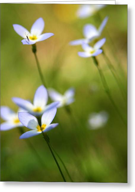 Quaker Photographs Greeting Cards - Sun Searching  Greeting Card by Neal  Eslinger
