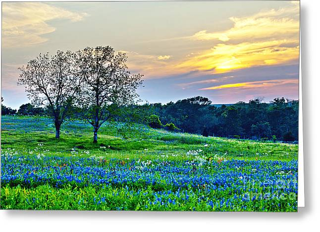 Cluttered Greeting Cards - Sun Setting on Another Texas Day Greeting Card by Katya Horner