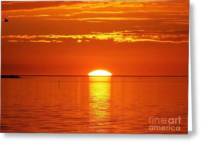 Cedar Key Greeting Cards - Sun Setting Over The Horizon Greeting Card by D Hackett