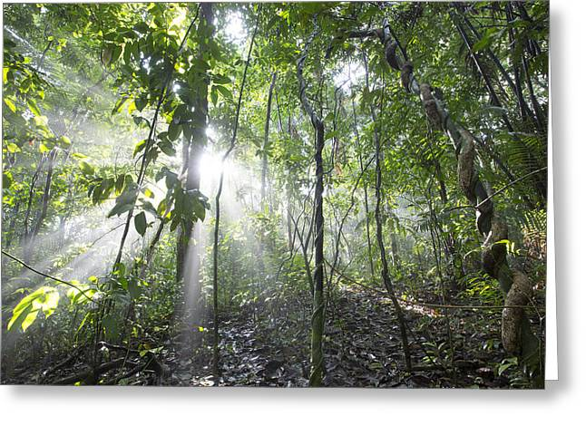 Cyril Greeting Cards - Sun Shining In Tropical Rainforest Greeting Card by Cyril Ruoso