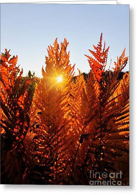 Sun Shining Through Fern Greeting Card by Dan Friend