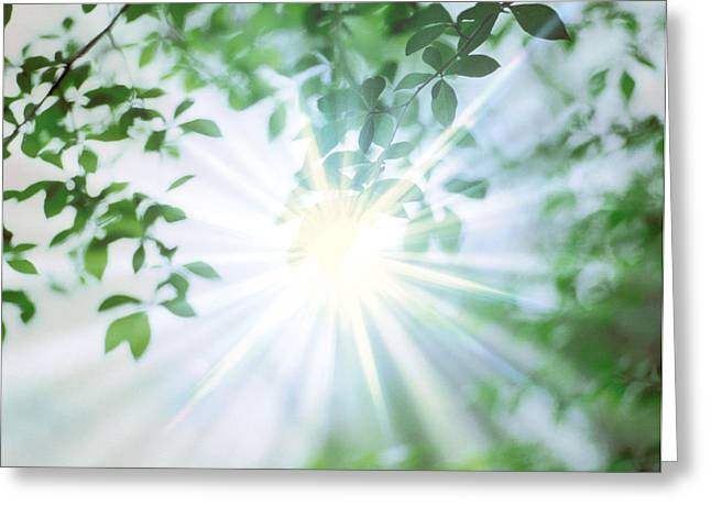 Digitally Altered Greeting Cards - Sun Shining Through Leaves, Lens Flare Greeting Card by Panoramic Images