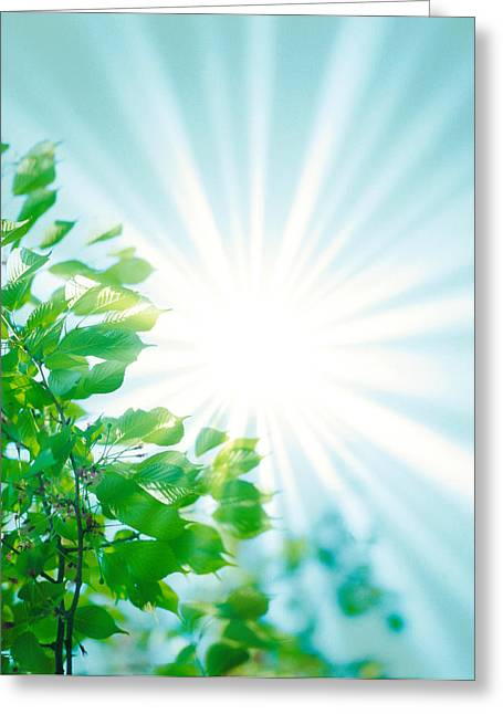 Beaming Greeting Cards - Sun Shining Through Leaves Greeting Card by Panoramic Images