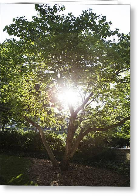 Sun And Tree Greeting Cards - Sun shining through Tree Greeting Card by John McGraw