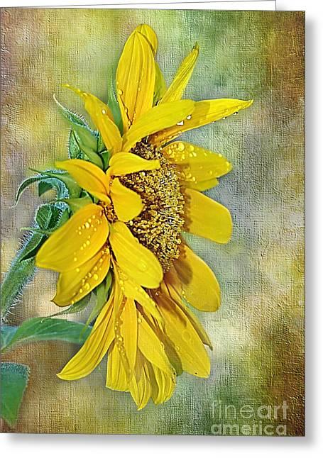 Golden Shower Greeting Cards - Sun Shower on Sunflower Greeting Card by Kaye Menner