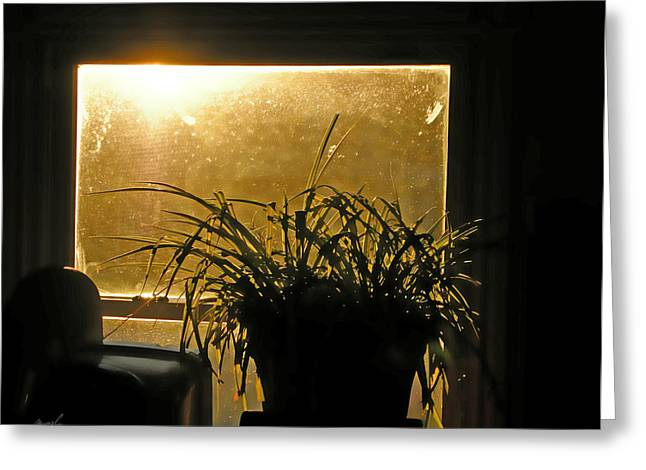 Potted Plant Digital Art Greeting Cards - Sun Struck Greeting Card by Jeanette Charlebois
