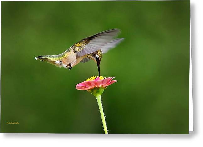 Hovering Greeting Cards - Sun Sweet Greeting Card by Christina Rollo