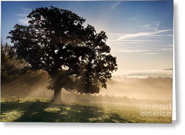 Misty Landscape Greeting Cards - Sun through tree Greeting Card by Rod McLean