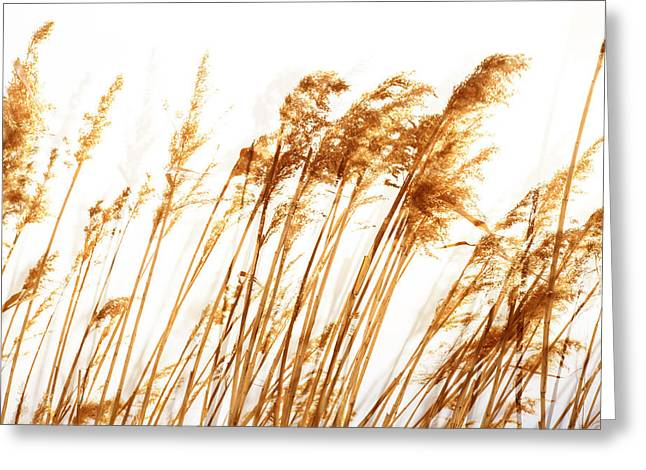 Sienna Greeting Cards - Sun Touched Greeting Card by Fran Riley