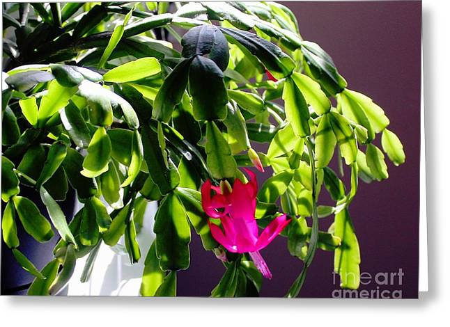 Green Barbara Griffin Art Greeting Cards - Sun Worshiper - Easter Cactus Greeting Card by Barbara Griffin