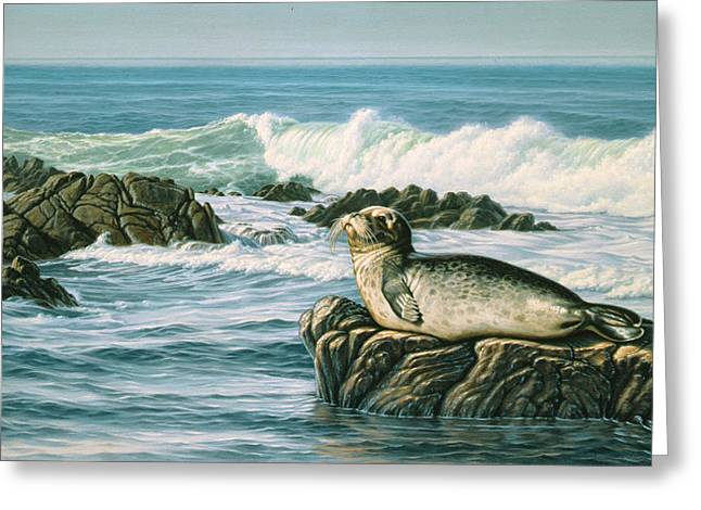 Seals Greeting Cards - Sunbather  Greeting Card by Paul Krapf