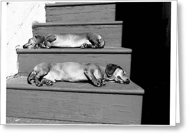 Hounddog Greeting Cards - Sunbathing Dachshunds Greeting Card by Johnny Ortez-Tibbels