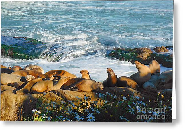 Sea Lions Greeting Cards - Sunbathing Sea Lions Greeting Card by April Antonia