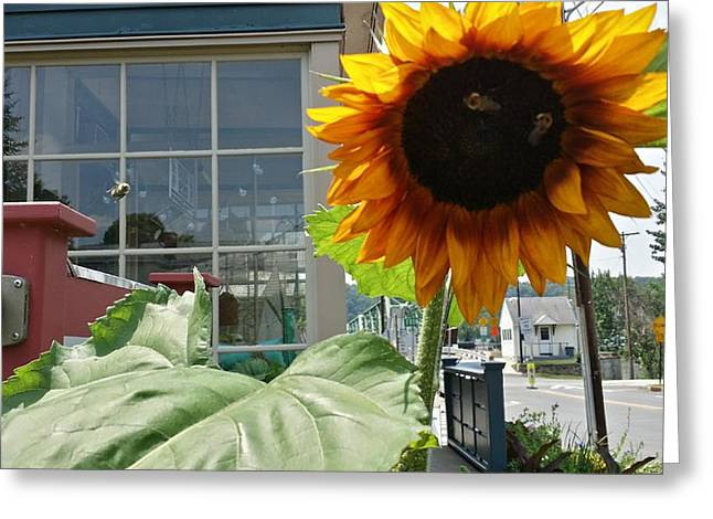 Bastille Greeting Cards - Sunbeam Fei Sunflower Greeting Card by Mark Victors