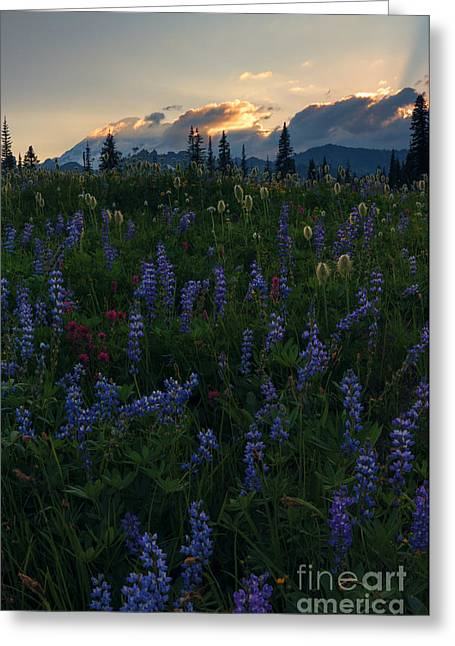Sunbeams Over Rainier Greeting Card by Mike  Dawson