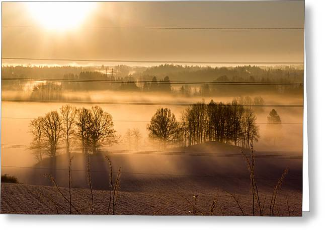 Christmas Greeting Cards - Sunbeams pour through trees at the misty winter sunrise Greeting Card by Aldona Pivoriene
