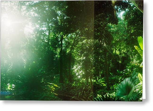 Subtropical Greeting Cards - Sunbeams Shining Through Trees Greeting Card by Panoramic Images