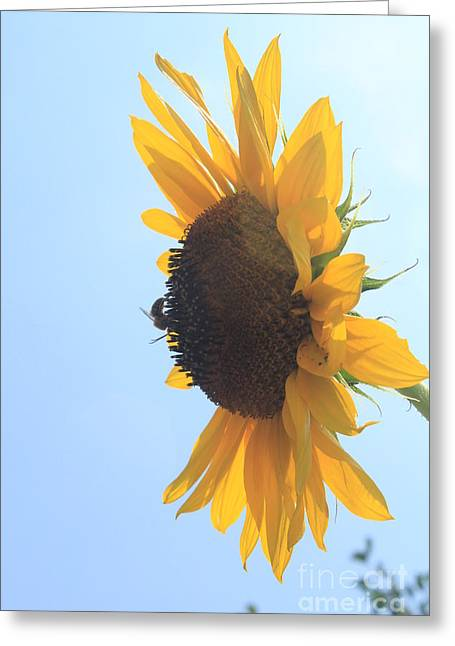 Lotus Greeting Cards - SunBee Greeting Card by Lotus