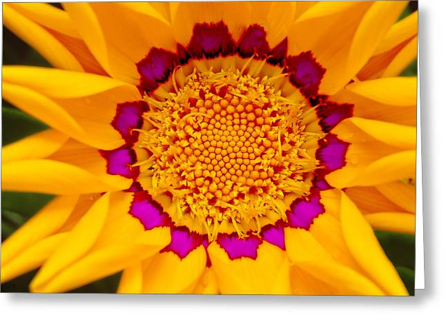Floral Digital Art Digital Art Greeting Cards - Sunburst Daisy Greeting Card by Bill Caldwell -        ABeautifulSky Photography