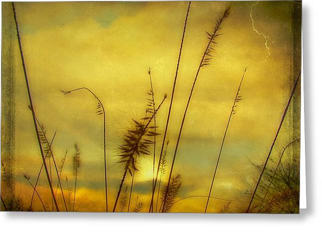 Fall Dusk Greeting Cards - Sunburst Greeting Card by Gothicolors Donna Snyder