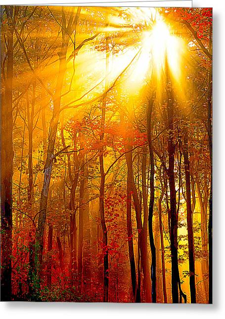 Randall Branham Greeting Cards - Sunburst In The Forest Greeting Card by Randall Branham