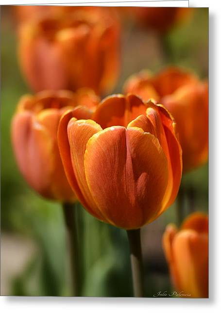 Chicago Botanic Garden Greeting Cards - Sunburst Tulips Greeting Card by Julie Palencia