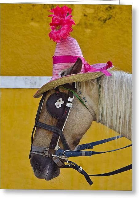 Blinders Greeting Cards - Sunday Bonnet  Greeting Card by Skip Hunt