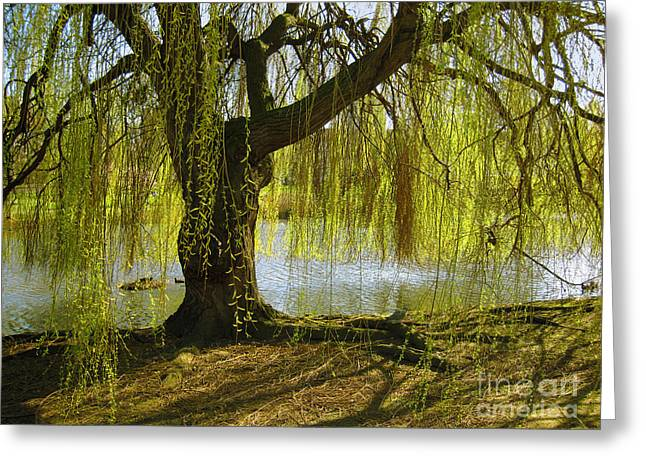 Weeping Photographs Greeting Cards - Sunday In The Park Greeting Card by Madeline Ellis