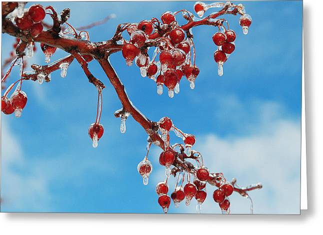 Lanscape Greeting Cards - Sunday with Cherries on Top Greeting Card by Frozen in Time Fine Art Photography