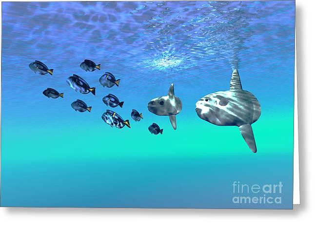 Sunfish Greeting Cards - Sunfish Greeting Card by Corey Ford
