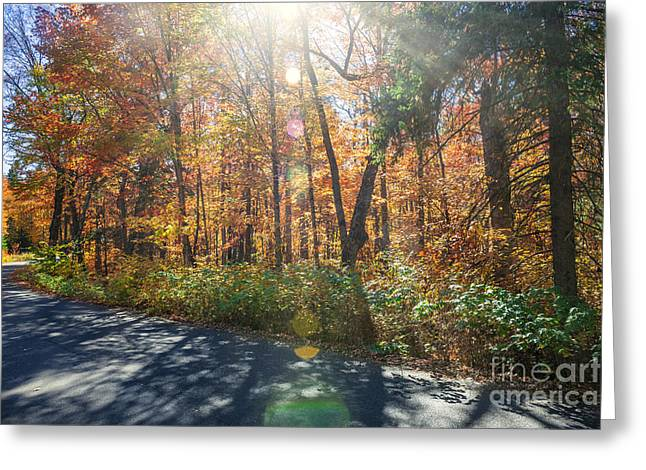 Canadian Landscape Greeting Cards - Sunflare in fall forest Greeting Card by Elena Elisseeva