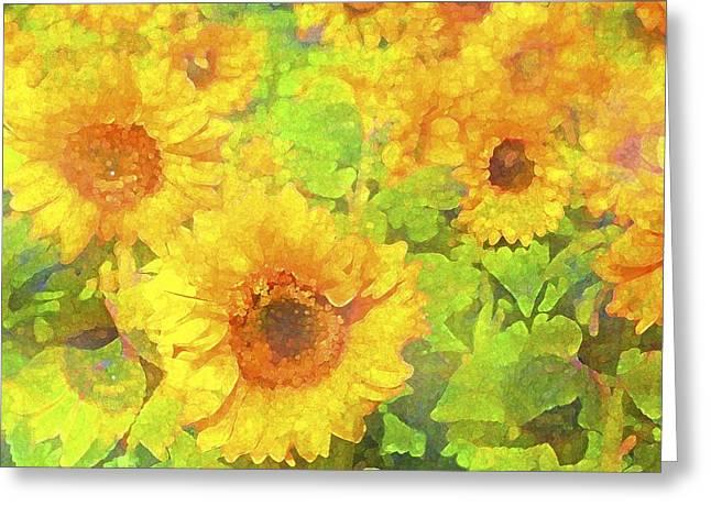 Pamela Cooper Greeting Cards - Sunflower 19 Greeting Card by Pamela Cooper