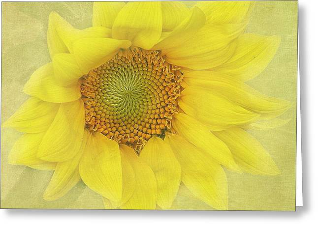 Sunflower 2 Greeting Card by Angie Vogel