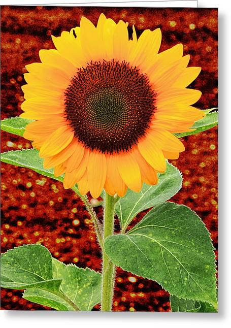 Key West Greeting Cards - Sunflower 2 Greeting Card by Bob Slitzan